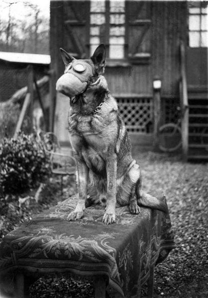 Eerste Wereldoorlog, Hond van het Franse Rode Kruis met gasmasker, 1917.
