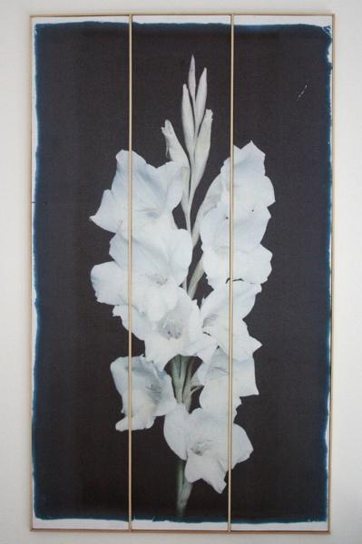 Gladiolus Primulinus II,  Inktjetdruk op zijde, hout, gesso, 2015