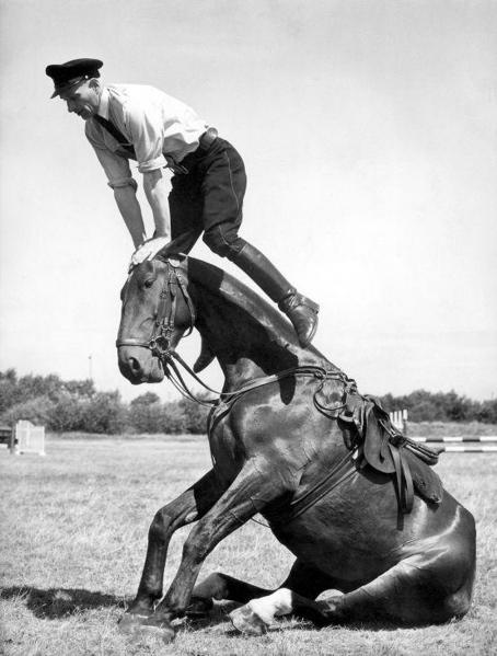 SFA001016706 | Hoofdagent B. van Beurden met zijn paard Bob geeft tijdens de Haagse politiefeesten een demonstratie van 'Paardje over'. Paard Bob zit op zijn achterbenen op de grond. Agent van Beurden springt over het hoofd van Bob (Zoals bij het kinderspel bokkiespringen). Den Haag ('s-Gravenhage), 1953.