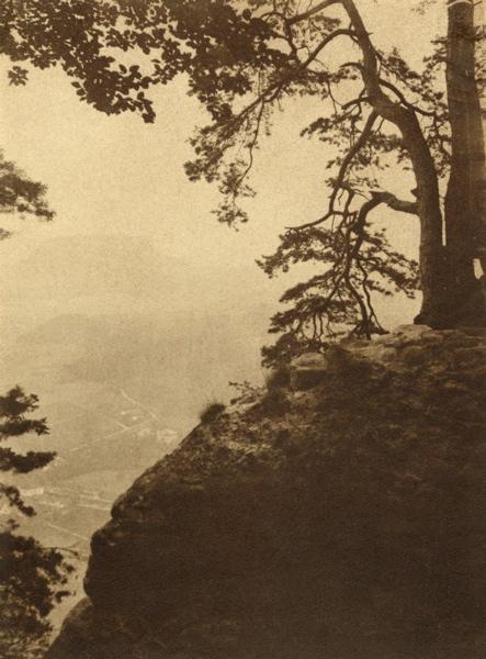 Berg met een naaldboom.